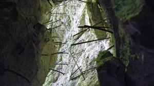 wilczy szaniec1 - źródło wikimedia.org